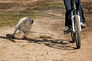 caine-bicicleta